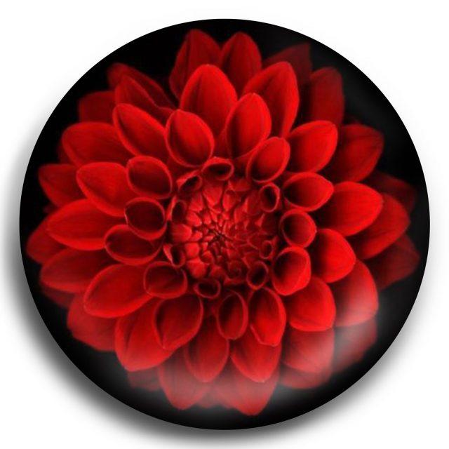 red floral blaze