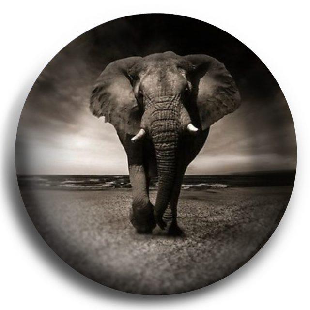 elephantsky